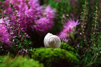 מחסנים לגינה – פיתרון נוח ואלגנטי