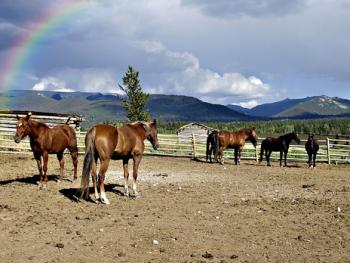 רכיבה על סוסים – רומנטיקה של העת החדשה
