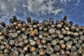 איך לחסוך ברכישת עצים עבור קמין עץ?