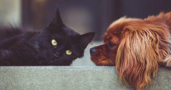 הזמנת אמפולות לכלבים וחתולים באינטרנט