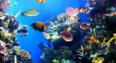מדוע עולם הים אורלנדו זה היעד המושלם עבורכם?
