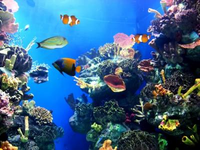 עולם הים אורלנדו