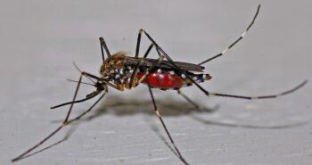 ריסוס נגד יתושים