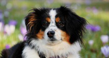 קולר נגד נביחות פטסייף ודרכים נוספות לגרום לכלב להפסיק לנבוח
