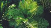 כל מה שצריך לדעת על סופחי לחות למגדלי צמחים