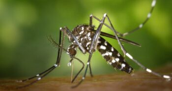 קטלני יתושים